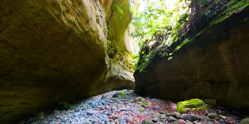 Canyon, Carnarvon Gorge